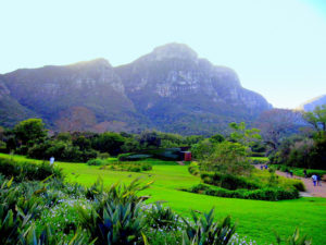 le-kirstenbosch-national-botanical-garden
