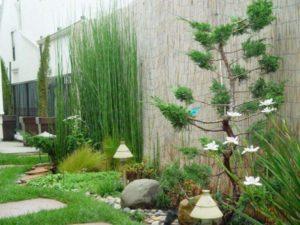 les-plantes-des-plus-petites-au-plus-grands
