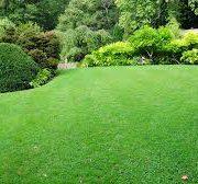 Pour une pelouse parfaite, choisissez bien votre tondeuse !