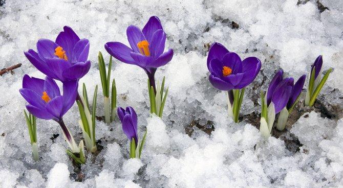 Jardinage en hiver : conseils et entretien