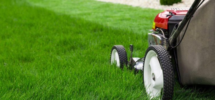 Bien entretenir votre pelouse