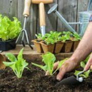 Premiers pas dans le jardinage
