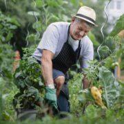 Faites appel à un pro pour votre jardin !