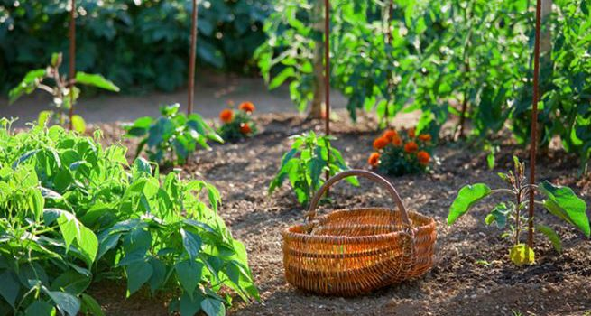 Les Français aiment-ils jardiner ?