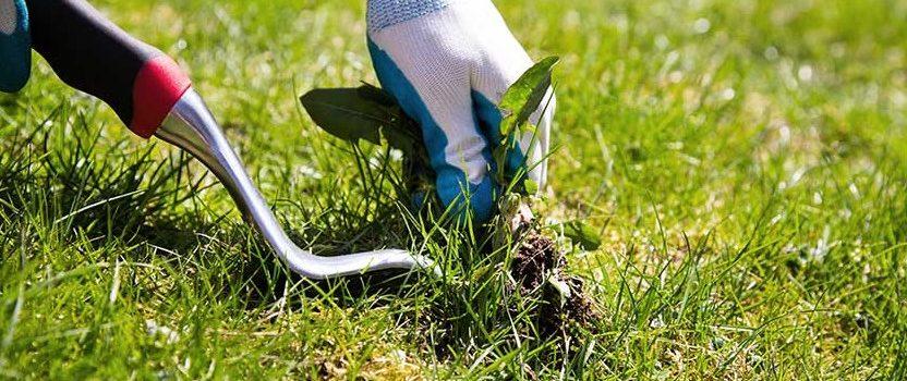 Entretien jardin : comment se débarrasser des mauvaises herbes ?